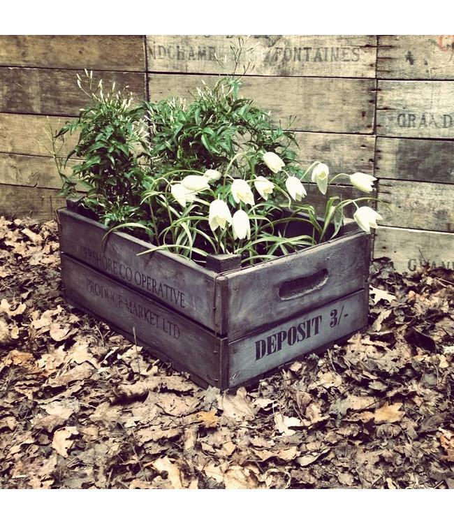 Antiker Holz- Blumenkasten aus London