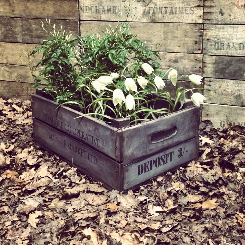 Villa Jähn Garten Kollektion Antiker Holz- Blumenkasten aus London