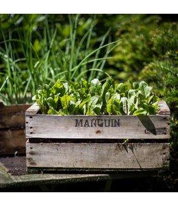 Garten Holzkiste