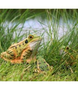 Wildlife Garden Frosch handgeschnitzt