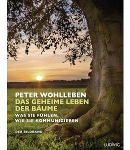 Gartenbücher Das geheime Leben der Bäume. Was sie fühlen, wie sie kommunizieren. Der Bildband