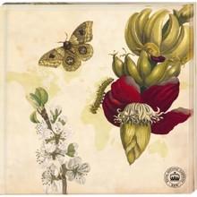 """Kew Gardens Kew Gardens - Untersetzer """"Schmetterling"""", 2er-Set"""