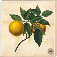 Kew Gardens Kew Gardens - Untersetzer Motiv Orange, 2er-Set