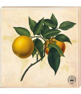 Shabby Chic Kew Gardens - Untersetzer Motiv Orange, 2er-Set
