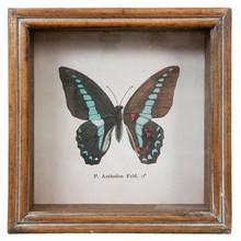 Wohnaccessoires Landhausstil Wandbild Schmetterling