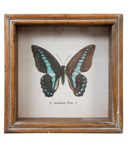 Shabby Chic Wandbild Schmetterling