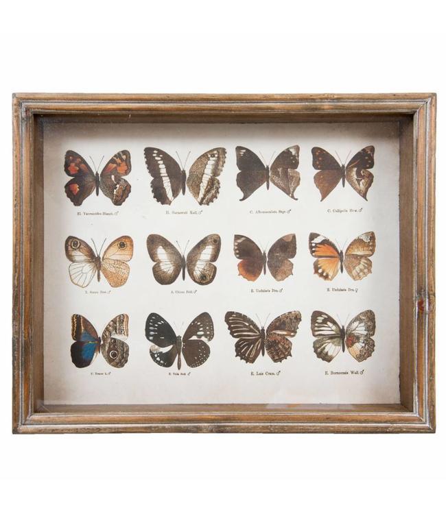 Wandbild Schmetterlinge