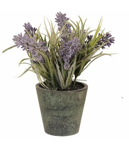 Landhaus Blumentopf mit Lavendel