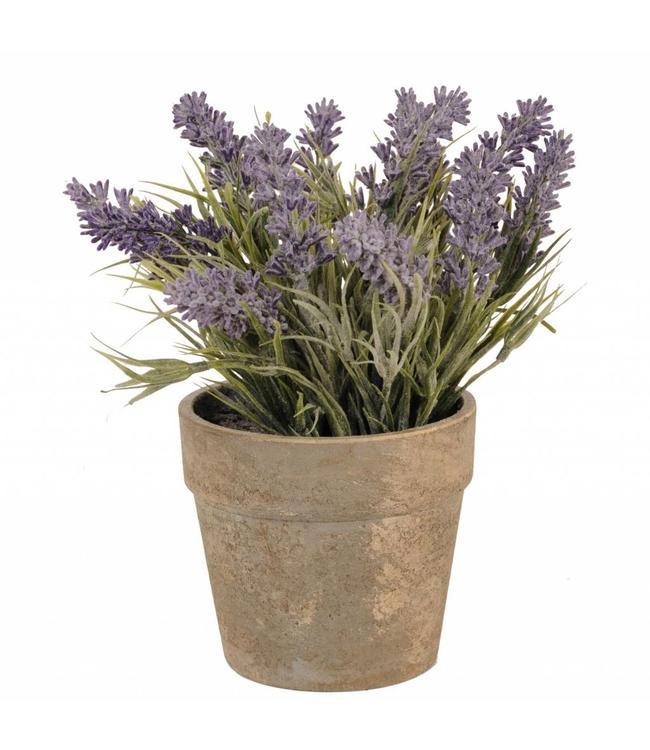 Blumentopf mit Lavendel