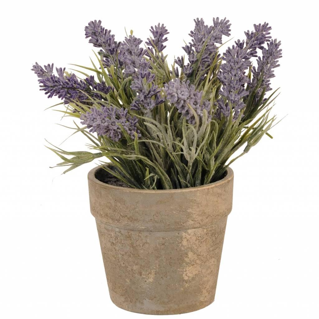 Wohnaccessoires Landhausstil Blumentopf mit Lavendel