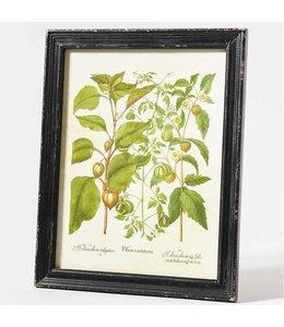 """Bild """"Pilum Cardatum"""""""