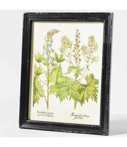 """Garten Bild """"Aconithum"""""""