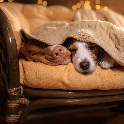 Hunde im Landhaus