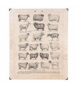 Landhaus Wandbild Schafe