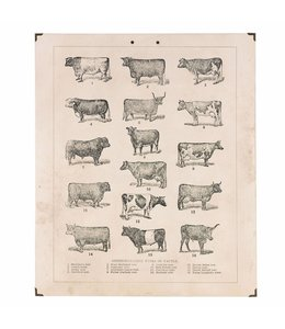 Wandbilder Wandbild Kühe