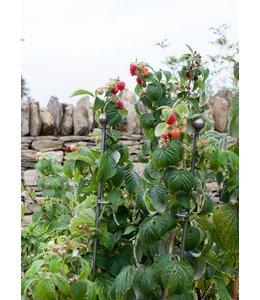 Garten Rankhilfe für Himbeeren - 3er Set