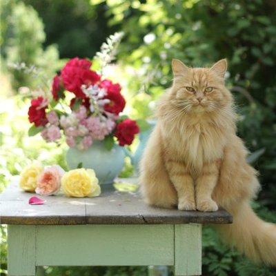 Katzen im Landhaus