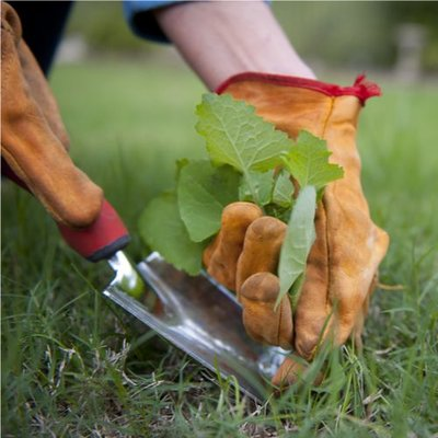 Rasenunkraut entfernen