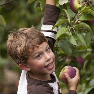 Äpfel & Birnen pflücken
