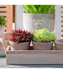 Blumentopf-Set mit Tablett