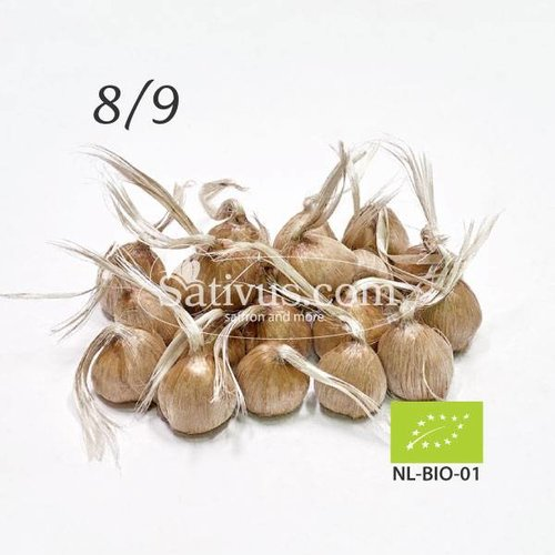 Crocus sativus 25 bulbi calibro 8/9 - BIO