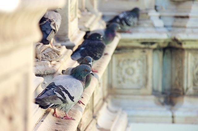 Duiven zorgen voor overlast en vervuiling