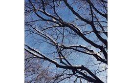 Duivenpinnen op takken van boom