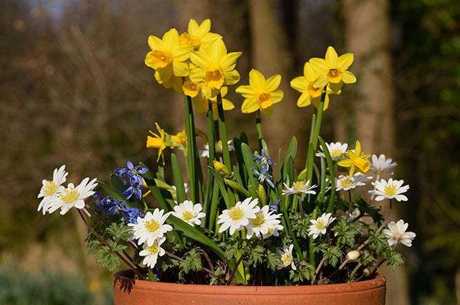Bollen Bloeiend Voorjaar : Hoe ontwerp ik met bloembollen de warande sterkebollen