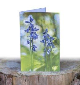 Wenskaart Spaanse Hyacint