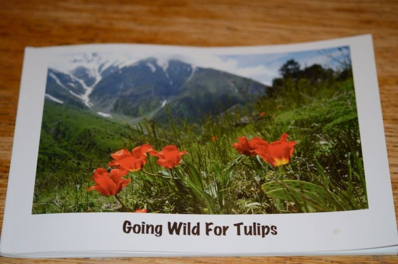Going wild for Tulips (Engels)
