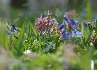 From A to T: all spring-flowering bulbs