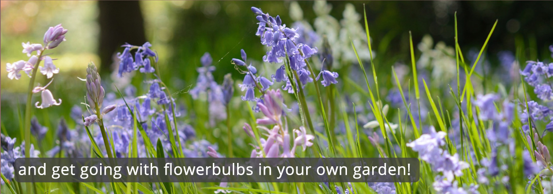 flowerbulbs-for-naturalizing