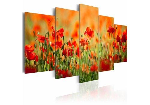 Schilderij - Klaprozenveld met levendige kleuren