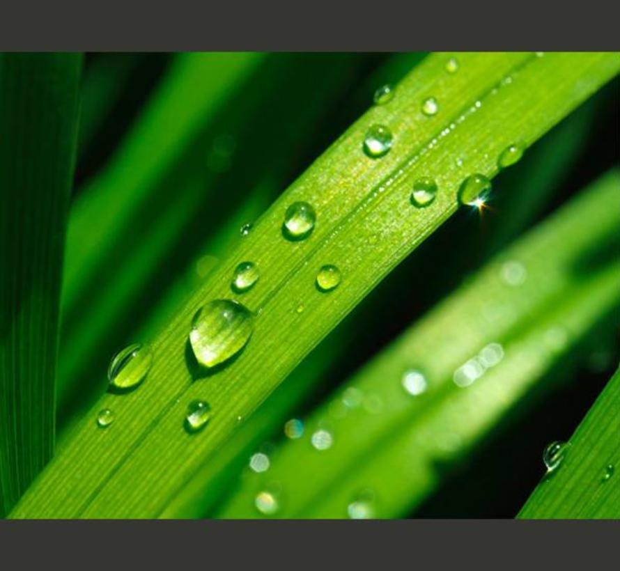 Fotobehang - Druppels op bladeren, groen