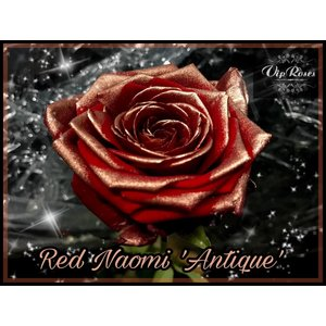 Rozen.nl Red Naomi+ Antique