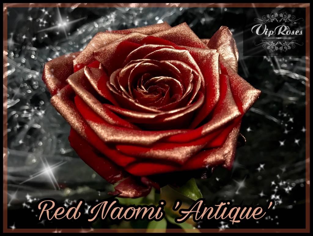 Rozen.nl Red Naomi+ Antique