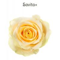 Savita+
