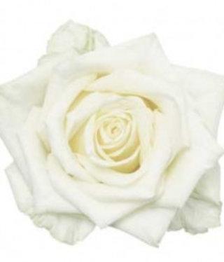 50 White Naomi