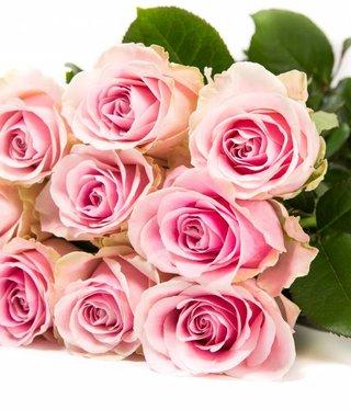 Rozen.nl 60 Pink Avalanche+