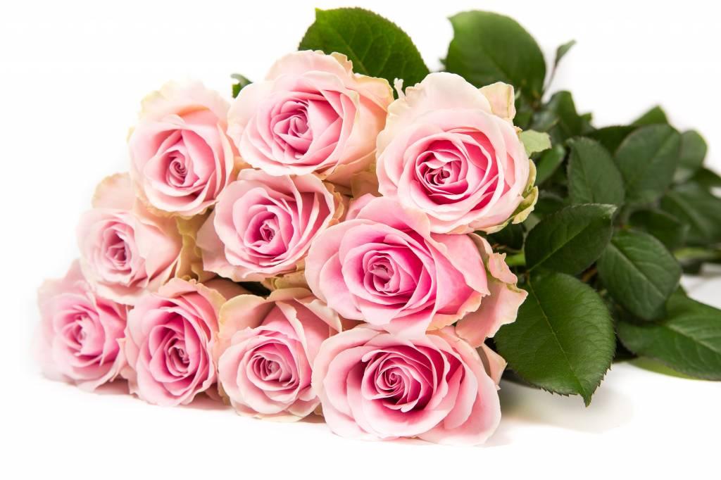 Rozen.nl 50 Pink Avalanche+
