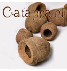 Catappa.nl Sapucaia pods