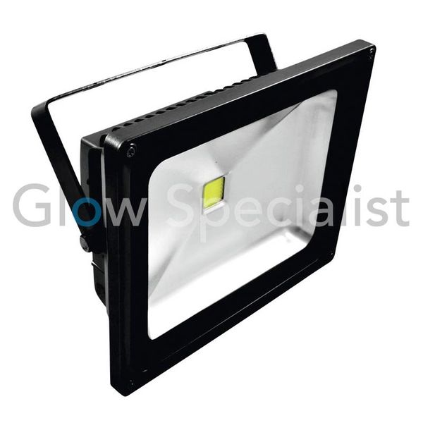 EUROLITE LED IP FL - 50 COB UV
