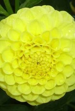 Deepest Yellow