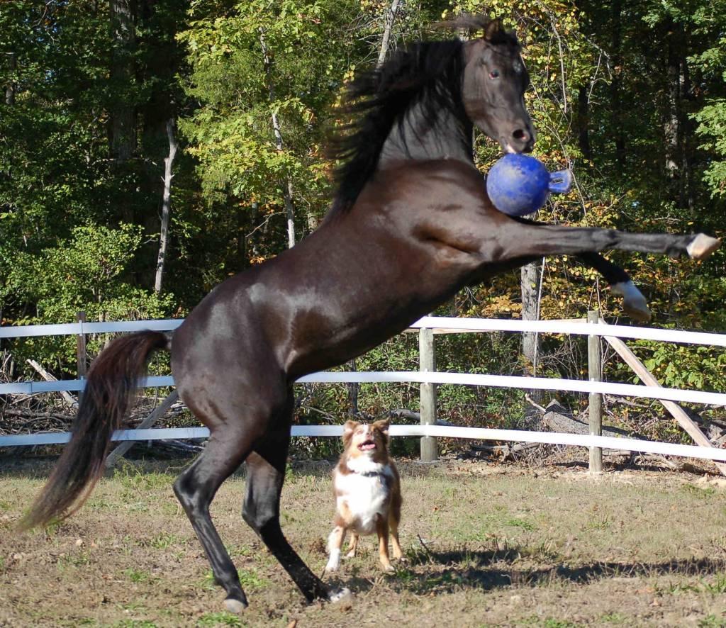 Jolly Pets Jolly Ball 20cm voor hond en paard