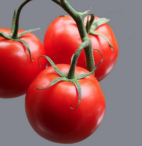 lycopeen tomato