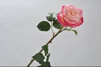 zijden roos