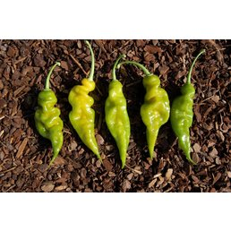 Trinidad Scorpion Green