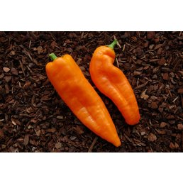 Ramiro Orange