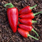 Mild Peppers
