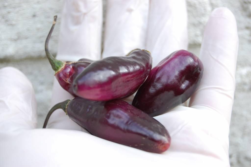 Pimenta da Neyde